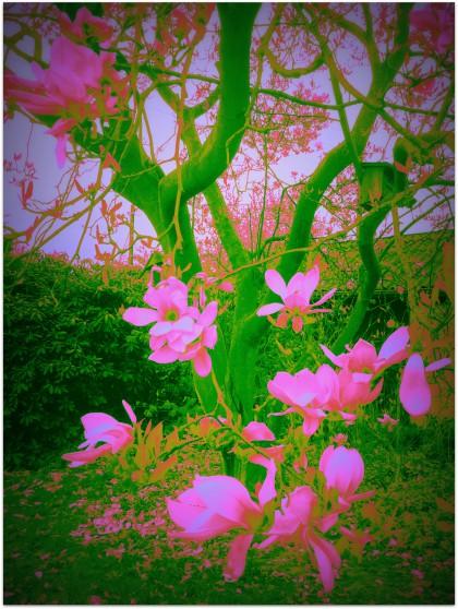 blüten bearbeitet